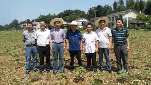 喻树迅院士到浏阳植棉修复污染耕地核心示范区指导工作