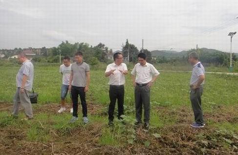 省棉科所与省棉花体系专家联合调研长株潭植棉替代区