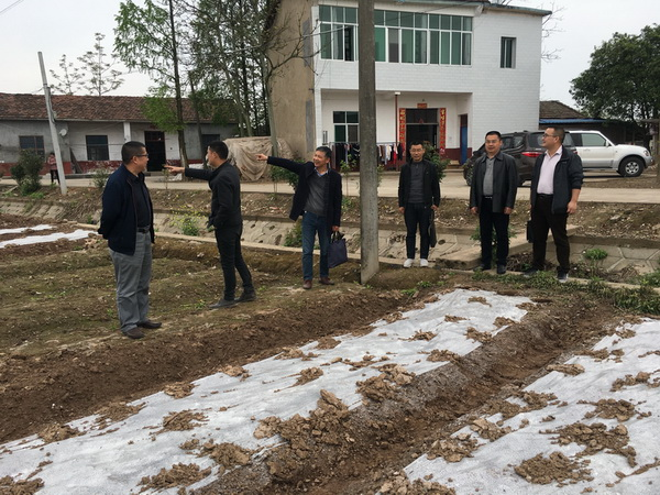 我所派员赴湘北各县调研经济作物产业形势