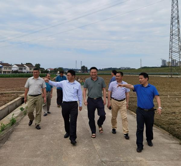 省现代农业项目专题调研组来省棉科所现场调研