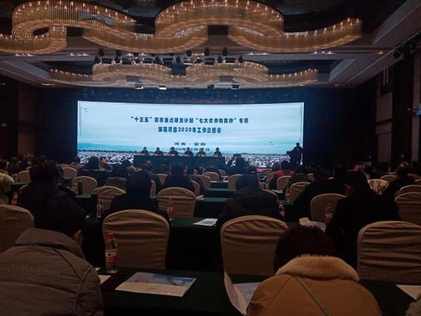 """省棉科所参加国家重点研发计划""""七大农作物育种""""专项棉花项目2020年工作总结会"""